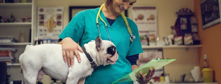 Vet with a dog