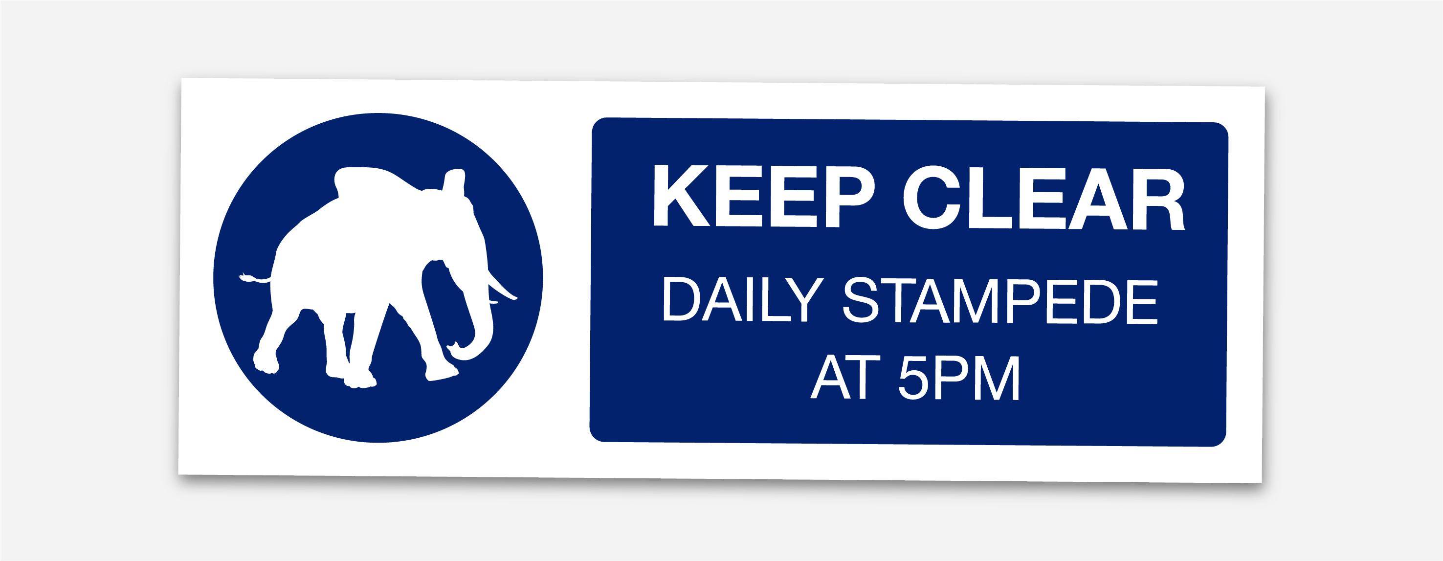 daily-stampede